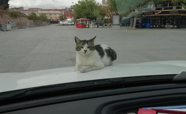 Kedi Merhamet Sahibi Polislerin Yanında Huzur Buldu