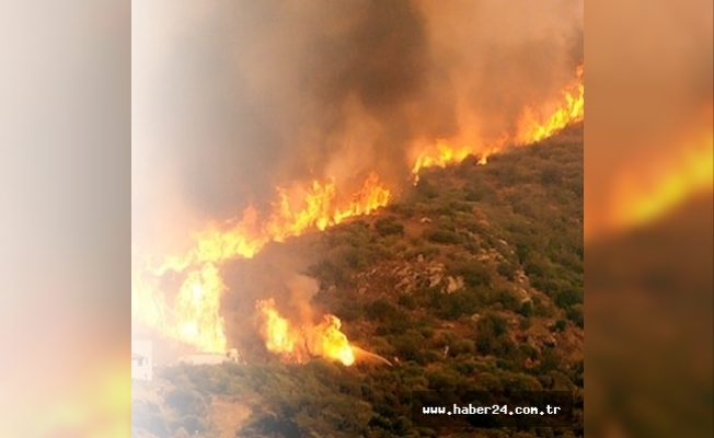 Çanakkale'de orman yangını çıktı!