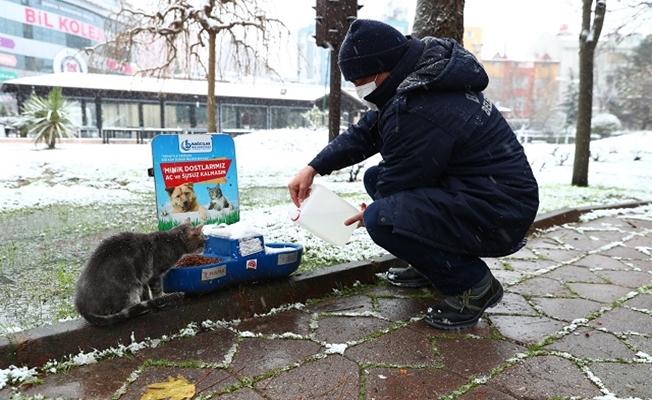 Bağcılar'da Sokak hayvanları için seferber oldular