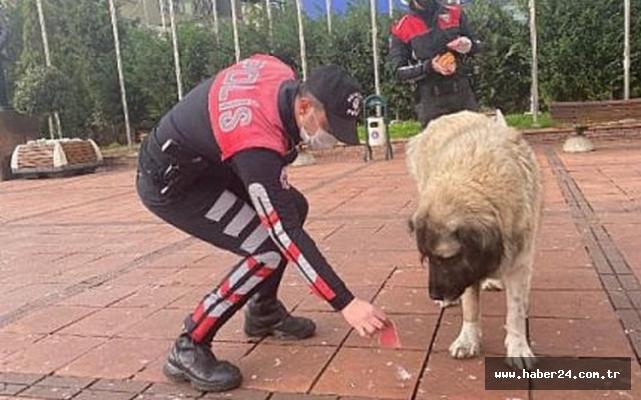 Maltepe Polisi sokak hayvanlarını unutmadı