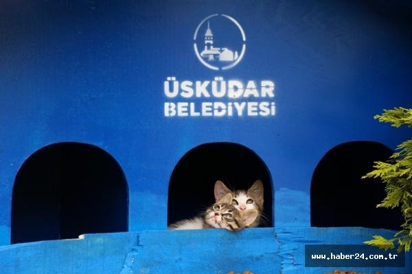 Üsküdar'da minik dostlara sabit su kapları