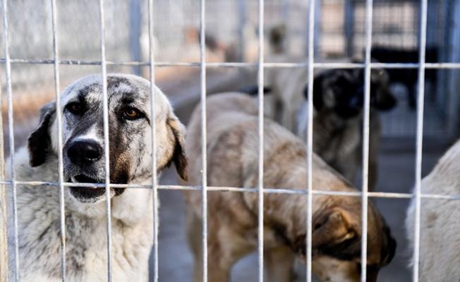 Hayvan hakları yasası tamam!