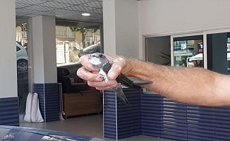 Nesli tükenmekte olan kuşu itfaiye ekipleri kurtardı!