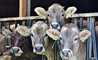 Resmi Gazete'de yayımlandı: Hayvancılık yatırımlarına yüzde 100'e kadar hibe