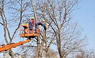 Kağıthane'de ekipler ağaçların sağlığı için sahada