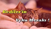 Kedilerin Uyku Sevgisi !